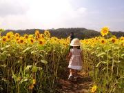 sakura's blog