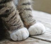 みんな幸せに♪「猫」の保護日記 (=・ェ・=) 〜室蘭