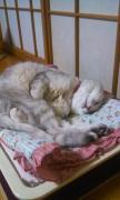 きまま☆ネコ的生活