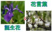 街めぐり・誕生花&花言葉・京田辺
