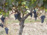 Wine Style〜ワインのある暮らし〜