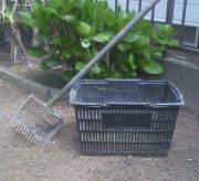 わが家の芝生日記2012