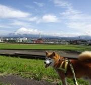 日本男子犬 桜太です!!