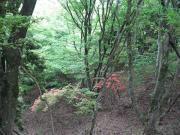伊賀・水と緑の会
