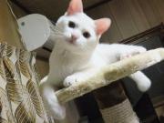 柴犬のうめと白猫の諭吉