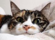 Lacycat's crochets -レース編みの記録-