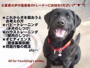 ドッグ・スクール You&Dog
