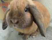 〜全てのウサギに愛を〜☆
