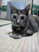 チャラ猫、チョビ♂と愉快なファミリー♪