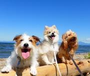 犬のようちえんとうちの犬たちのキラキラの日々