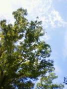 木の葉のような日々