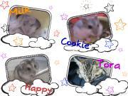 ほのぼの猫×ハム日記