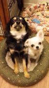 犬服屋kurumi