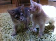 mina söta katter