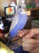 BIRD LAND 〜鳥御殿〜