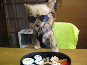 ノーベル賞候補犬 サンちゃん