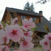 木の家に住む (マシンカット ログハウス)