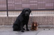 Dog Training Bow Wowのブログ