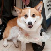 やんちゃ犬・ロキシー&飼い主・M