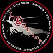 L&Shrimpの第2章開幕!!