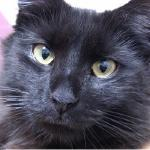黒猫先生のブログ