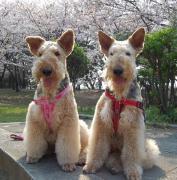 I Love Hanako & Momo 2