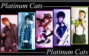 PlatinumCatsさんのプロフィール