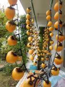 果物好きが昂じて果樹栽培
