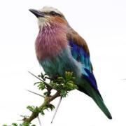 アフリカで野生動物を撮る