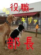 細犬とモジャ犬が看板犬のWinculum(うぃんくるむ)