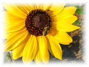 植物を楽しむ写真日記
