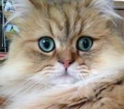 やっぱり猫が好き!