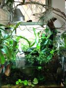 Aqua-Plants