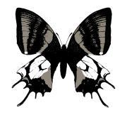 日本蝶類学会(テングアゲハ)さんのプロフィール