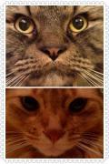 歯列矯正、そしてネコ。