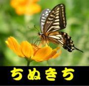 ぶらり散歩で蝶と野鳥の写真