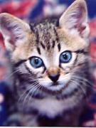 猫さん写真ブログ