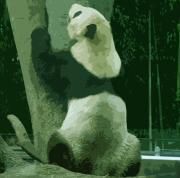 パンダのダイエット