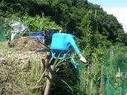 ベランダ菜園南向き時々自然農