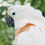 鳥撮り三昧