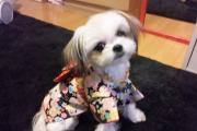 杏ぴぃはmix犬