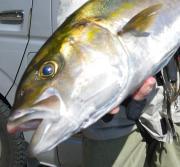Aggressive Fishing Life