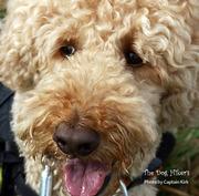 犬と山 -The Dog Hikers-