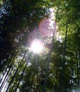 木洩れ日業務日記