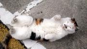福猫日和り