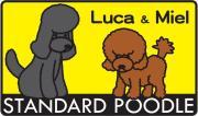 ルカとミエルの今日も犬日和