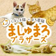 ましゅまろブラザーズ〜しましま猫とマロ眉猫の成長録