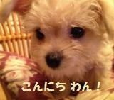 ちょいワルオヤジの どんだ犬 ☆/
