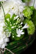 Le Bouquet de Hortensia
