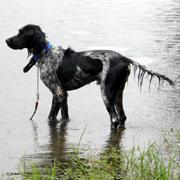 マスコット犬「クー」の生活